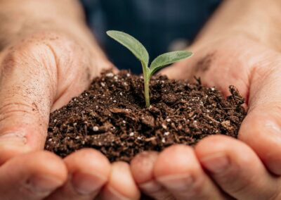 Easy Ways to Go Green at Your Accommodation Business